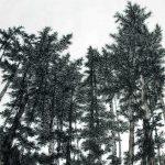 Bo Mi Kim - Listen Forest